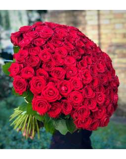 100 raudonų rožių