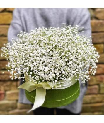 Gipsofilija arba guboja gėlių dėžutėje