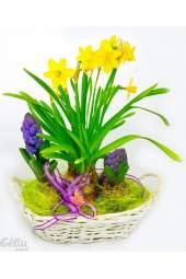 Pavasarinių vazoninių gėlių kompozicija