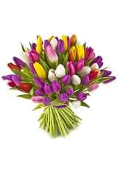 Įvairių spalvų tulpės