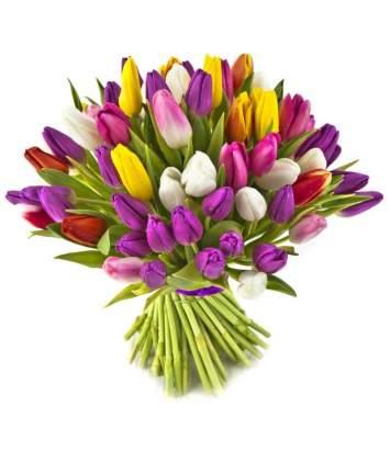 25-ios įvairios tulpės