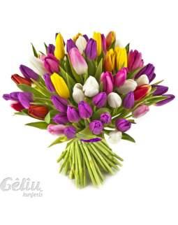 25 įvairių spalvų tulpės