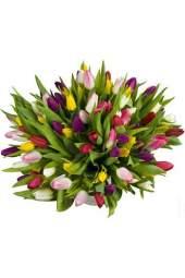 100 įvairių spalvų tulpių