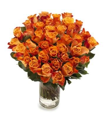 50 oranžinių rožių puokštė