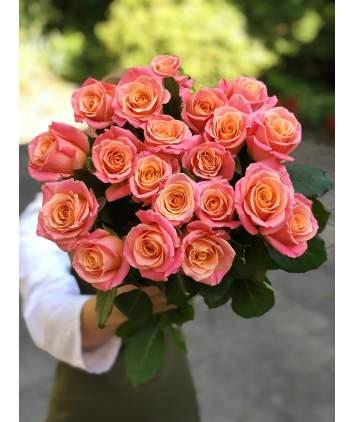 """Miss piggy"" rožės"